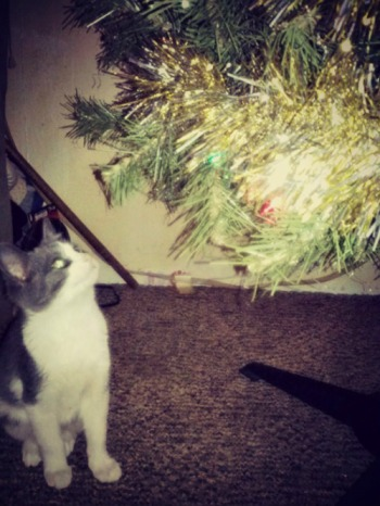 Little Zoltan looking at the tree. He was actually lying underneath it before my sister took this picture. This pose is just perfect.