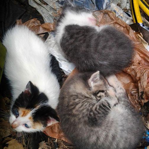 All three babies..