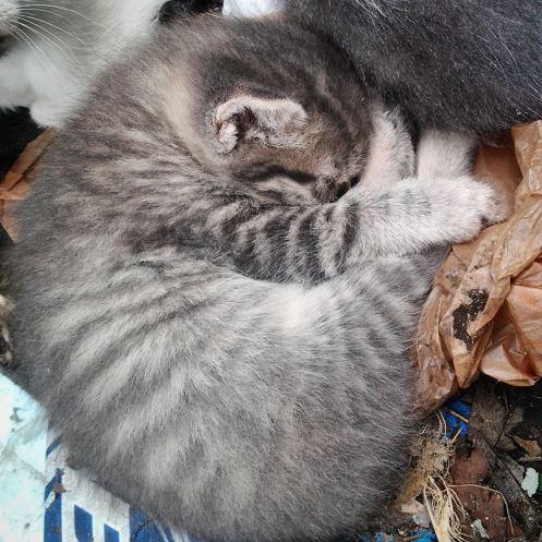 My sleepy little Silver Moonlight