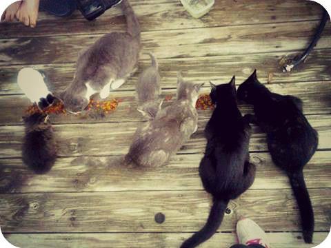 (L to R) Kells, Belle, Grumpy, Silver, Wren, Bootsie, and Midget