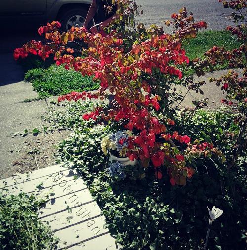 My grandparent's burning bush