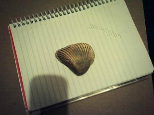 the lone sea shell