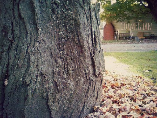 I took this picture only to focus in on the arch of the tree, where it starts to curve sideways.