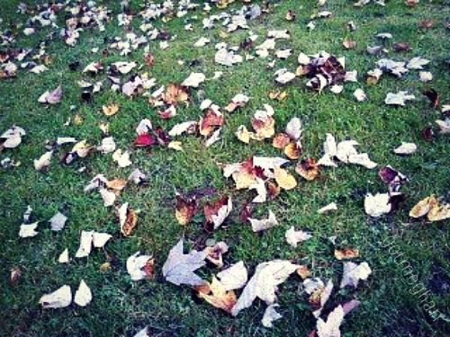 Dad mowed the yard so these were new leaves on top of newly cut grass. Lol