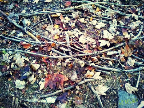 The pretty autumn ground full of dying leaves, sticks, and dirt.