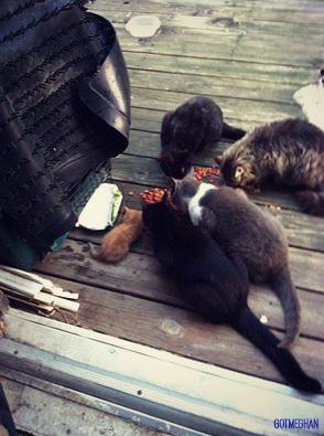 Spot the kitten!